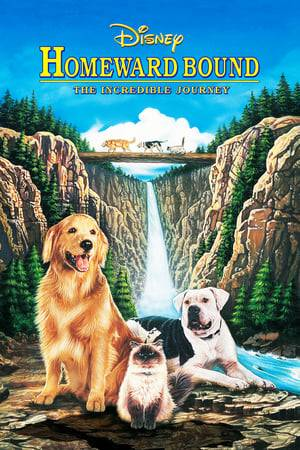 Watch Homeward Bound: The Incredible Journey Online