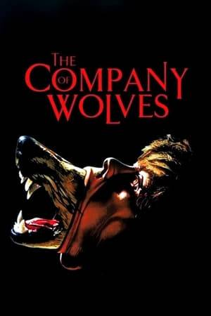 Watch The Company of Wolves Online