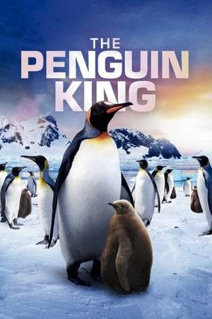 Watch The Penguin King Online