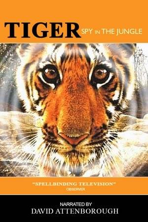 Watch Tiger: Spy In The Jungle Online