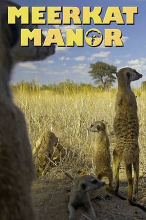 Watch Meerkat Manor Online