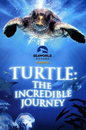 Watch Turtle: The Incredible Journey Online