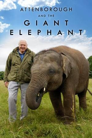 Watch Attenborough and the Giant Elephant Online