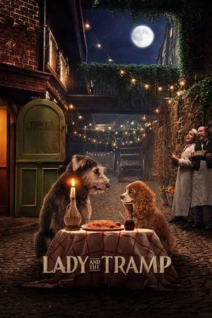 Watch Lady and the Tramp Online