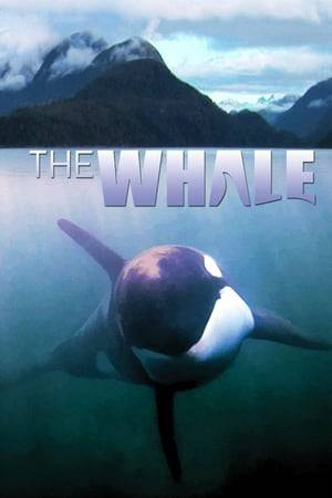 Watch The Whale Online