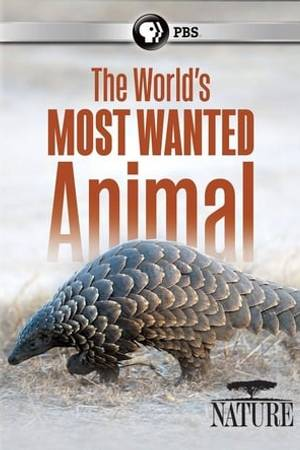 Watch The World's Most Wanted Animal Online