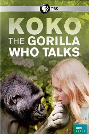Watch Koko: The Gorilla Who Talks to People Online