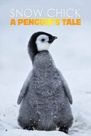 Watch Snow Chick - A Penguin's Tale Online