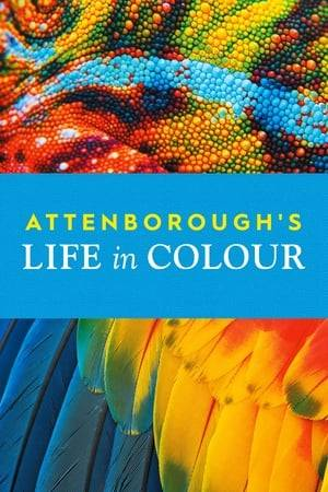 Watch Attenborough's Life in Colour Online