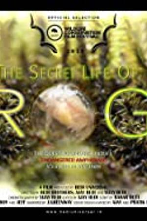 Watch The Secret Life of Frogs Online
